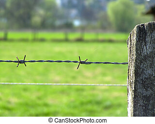Barbed Wire - Image of a Barbed Wire