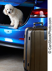 Packing luggage in car trunk with white poodle dog.