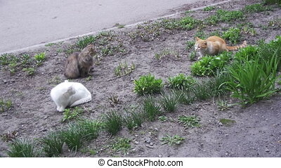 Three Homeless Cats on the Street in the Park. Slow Motion -...