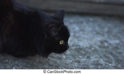 Black cat is looking for something