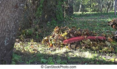 male work with barrow and rake in own backyard autumn time....
