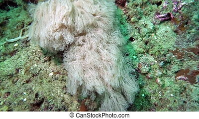 Beautiful colorful hard and soft corals in underwater in...