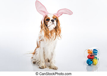 Puppy easter eggs - Cute puppy with bunny ears big eyes with...