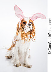 Puppy easter eggs - Cute puppy with cute bunny ears and big...