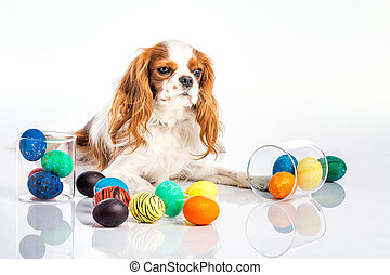 Puppy easter eggs - Cute puppy with big eyes with colored...