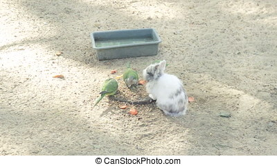 parrots and rabbits together eating from one plate