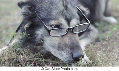 old wise dog in glasses, violence against animals - old wise...