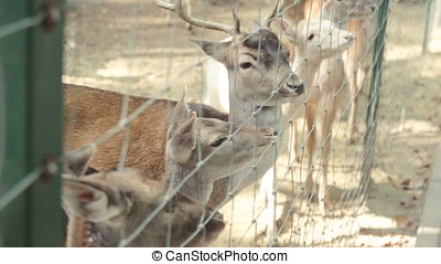 the Deer walking at forest - Deer walking at forest and make...