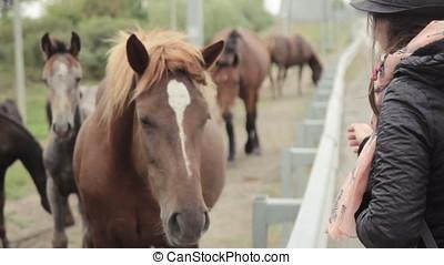 girl petting eating grass horse - Horse eat grass when girl...