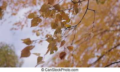 leaves at bushes moves by wind - autumn leaves at bushes...