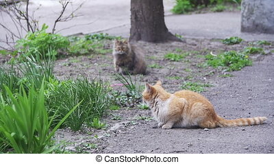 Two Red and Gray Homeless Cats on the Street in the Park....
