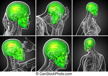 3d rendering medical illustration of the skull - 3d...
