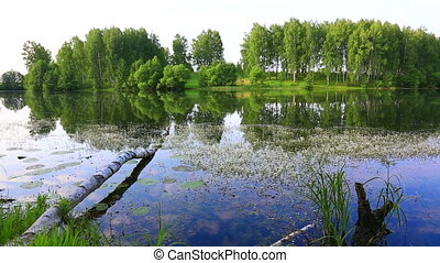 Calm river on the plain. Bright green foliage