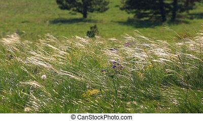 grass on sunny meadow - dry grass on sunny meadow