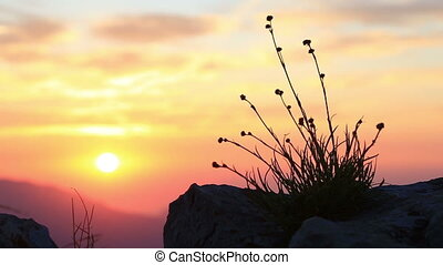 rising sun in mountains at sunrise - Grass on background of...