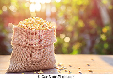 Peeled yellow soybean in small sack on wooden table. Outdoor...