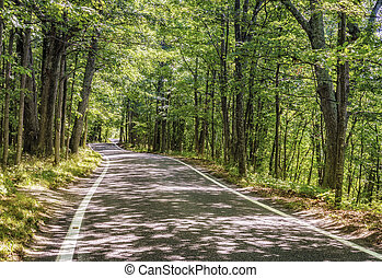 Road through the woods - Tonnel of Trees Scenic Heritage...