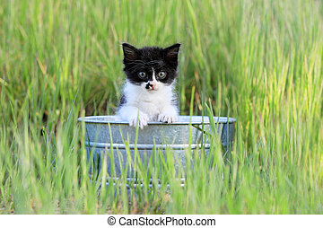 Kitten Outdoors in Green Tall Grass on a Sunny Day -...