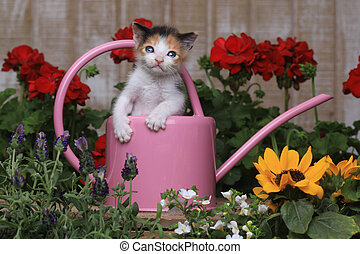 Cute 3 week old Baby Kitten in a Garden Setting - Adorable 3...