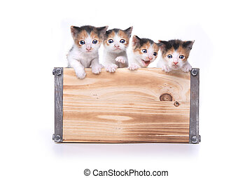 Cute Box of Kittens Up for Adoption - Adorable Box of 3 week...