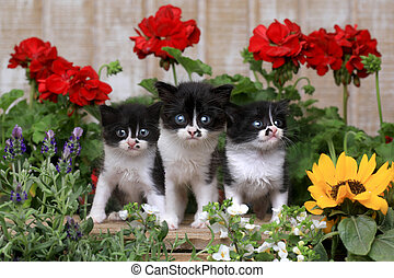 Cute 3 week old Baby Kittens in a Garden Setting - Adorable...