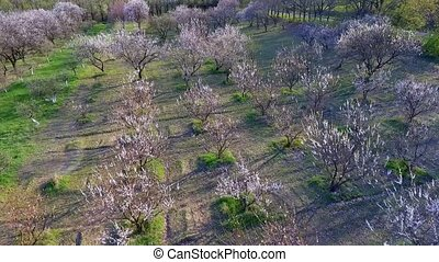 trees in springtime. sunshine light. flying. aerial view. -...