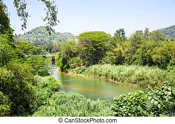 Jungle river and tropical undergrowth on Sri Lanka. Ceylon...
