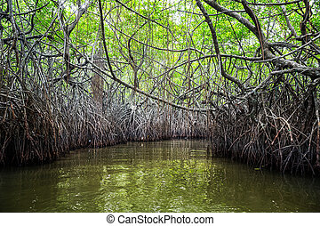 Jungle river and tropical mangroves on Ceylon. Sri-Lanka...