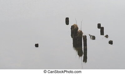 Snags in the calm river. Winter natural background.