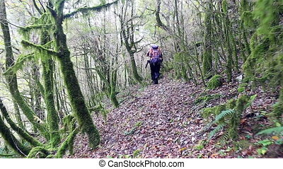Backpacker walking through the wild forest by path