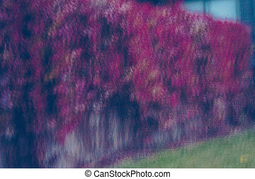 Long exposure causing motion blur effect of a red rose,...
