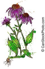 Echinacea flower grunge splashes illustration