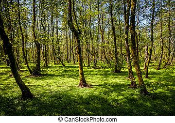 hermoso, paisaje, húmedo, primavera, soleado, verde, bosque,...