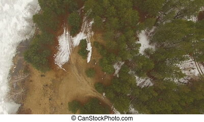 Flying over beautiful forest trees - Aerial view flying over...