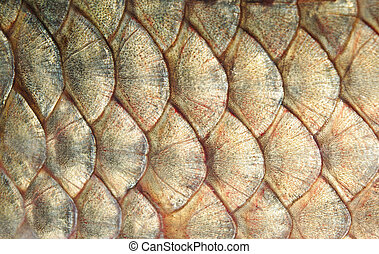 scales - Large scales of fish in the form of an armour A...