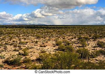 Sonora Desert Arizona - The Sonora desert in central Arizona...