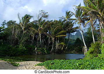 Tropical Lagoon - Lagoon and Palm trees blowing in the wind,...