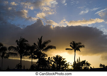 Tropical Sunset - Magnificent tropical sunset behind palms...