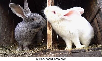 Two rabbits sitting in their cages.