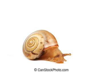 funny snail ,looking guilty - funny snail ,isolated on white...