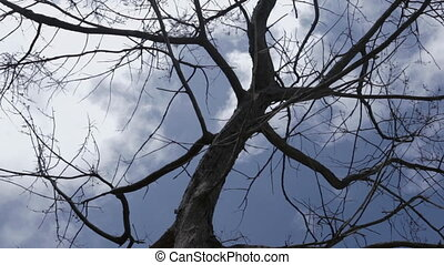 branches of tree and sky - branches of tree and cloudy sky