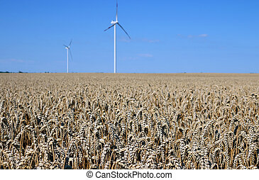 wind turbines on wheat field renewable energy summer season