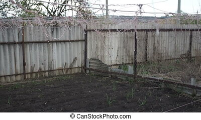 The vegetable garden, rope for tying vegetables, sway in the...