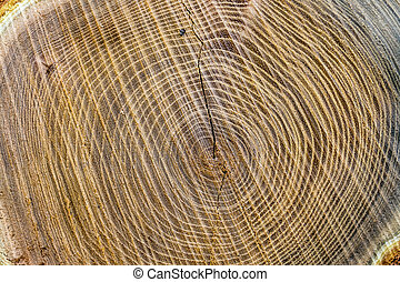 tree trunk - eie sectional area of a tree trunk, symbolic...