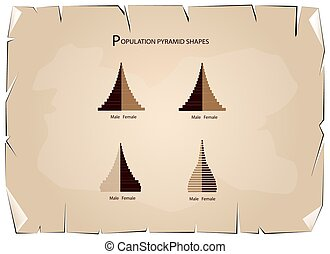 The 4 Types of Population Pyramids Graphs - Population and...