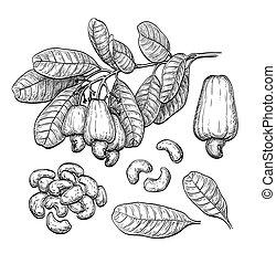 Cashew big set. Ink sketch. Hand drawn vector illustration....