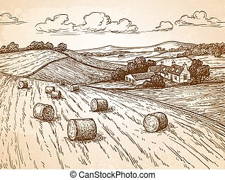 Field with haystacks. Countryside landscape. Rustic scenery...