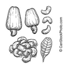 Ink sketch of nuts. - Cashew set. Ink sketch of nuts. Hand...