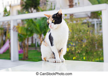 Cute cat outdoors - cat outdoors. Cute cat in the garden