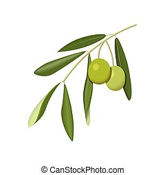 Olive branch with green olives on a white background...
